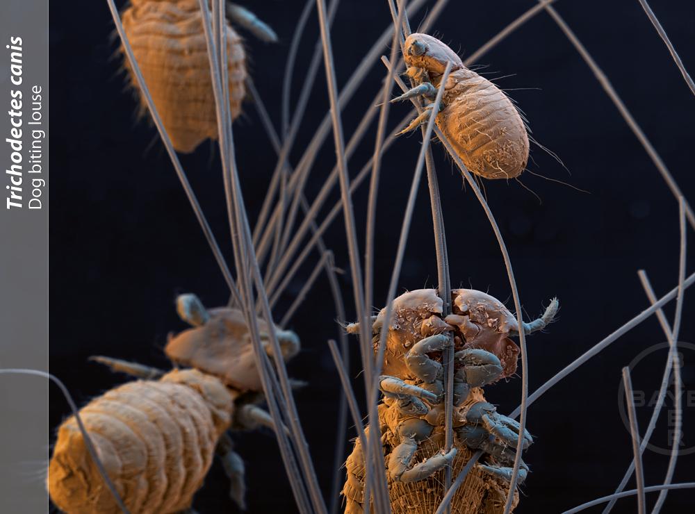 czy zwierzę może nas zarazić chorobą?