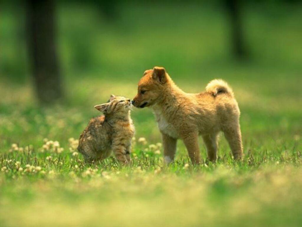 Profilaktyka przeciwkleszczowa u psów i kotów